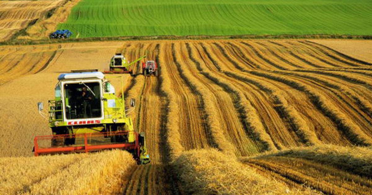 Продажа земельных участков сельхозназначения (купить по образцу)